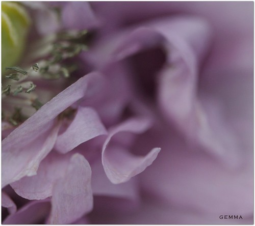 Delicate Touch.. | by Gemma - A Passionate Photographer