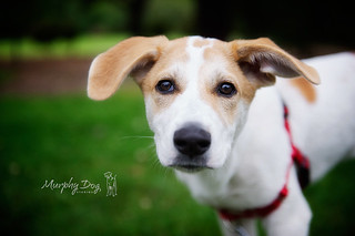 Our new rescue | by Murphy Dog Studios