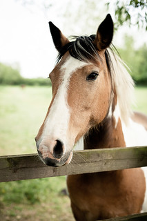 Horse | by Sarka Babicka Photography
