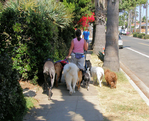 Virginia Beach Dog Walker