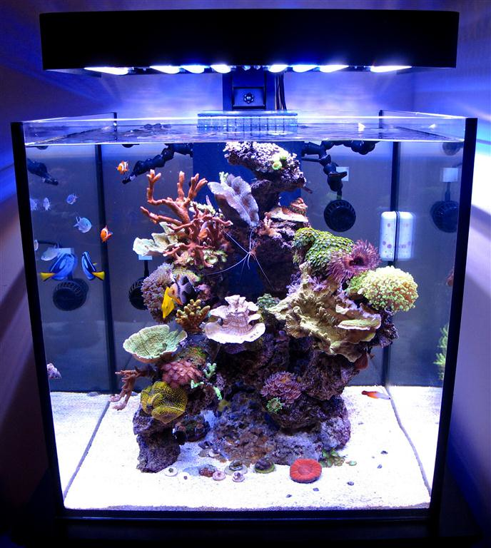 Solanaxl60 Aquarium Lit With Panoramaledfixture This 60 Ga Flickr