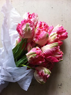 parrot tulips | by dollydishcloth
