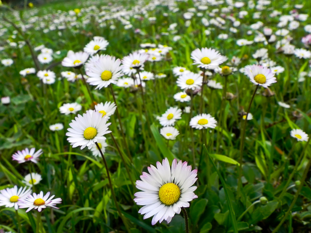 Large Spring Flowers Davizso Flickr