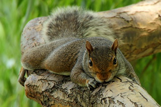 Squirrel Treehugger | by Mr.TinDC
