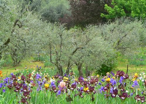 Firenze giardino dell 39 iris firenze giardino dell - Giardino dell iris firenze ...