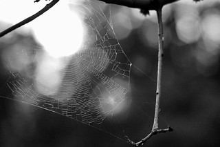 2014/365/169 It Is Just The Web, That's It and Everything | by cogdogblog