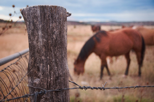 Happy Fence Friday {Grazing} Edition! | by pixelmama