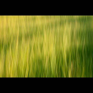 Barley Field  Abstract ICM | by PMMPhoto