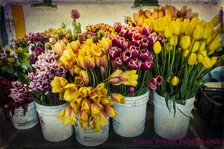 Tubs of Tulips for Sale | by KPortin
