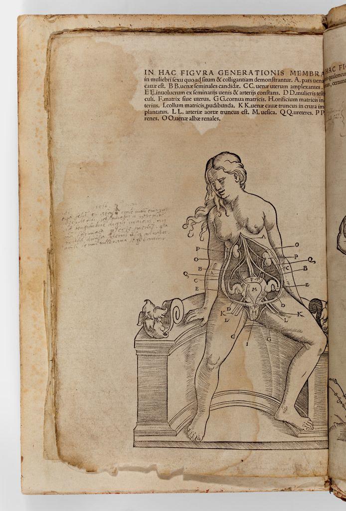 Inside The Female Body Omnium Humani Corporis1641 An A Flickr