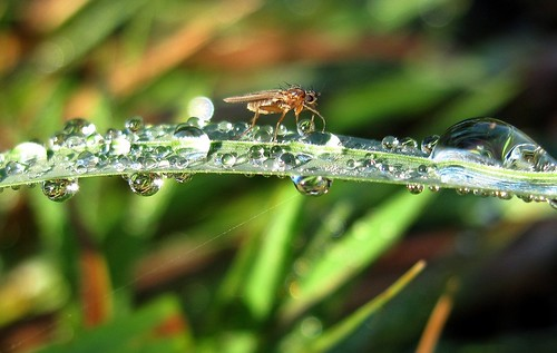 Fly grass and raindrops | by GrahamRB1