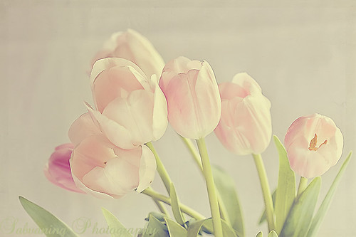 Love Tulips! | by Sabvaning.