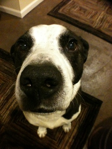 Wide Angle Dog | I just got a wide angle lens for my ...