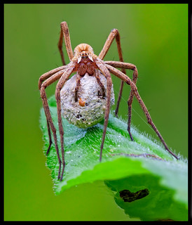 how to get rid of spider egg sacs