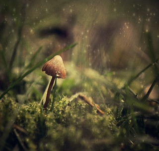 In the land of the fairies {Explored fp} | by Paisley patches