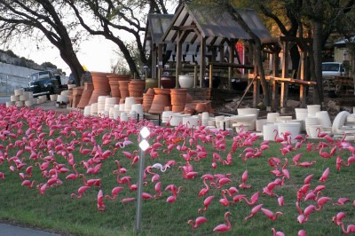 Pots Plants Garden Center Austin flamingos Famous decora Flickr