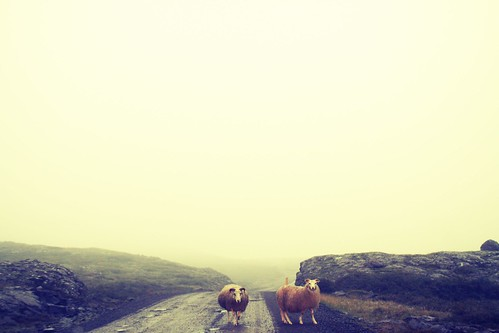 sheep | by Sarah Ryhanen
