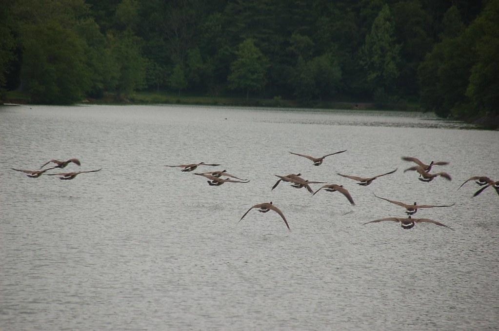 2011 5 15 Steele Creek Park Bristol Tennessee Robert Spiegel