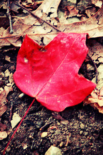 Renaissance Park - a fallen leaf in the path | by remo@b'lore