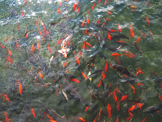 koi at Big Spring Park | by eat-juice