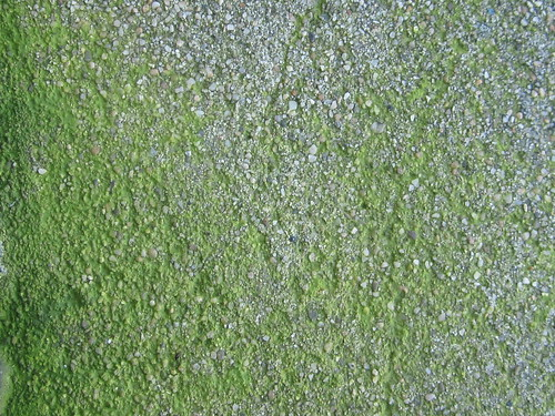 how to get rid of moss on concrete