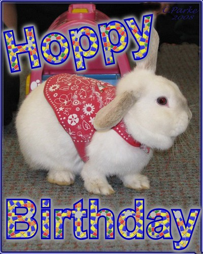 eCard: Birthday: Rabbit - hoppy birthday | by you get the picture