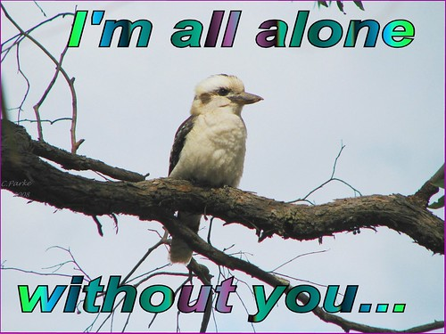 eCard: Missing You -I'm all alone | by you get the picture
