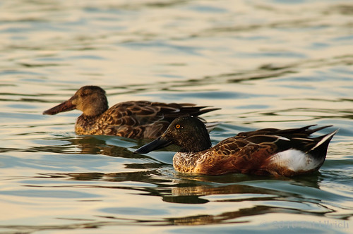 Sunset shovelers | by Pat Ulrich