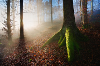 Touched by the light | by Thierry Hennet
