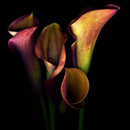 THE GOLDEN CURVES and CHALICES of CALLAS | by magda indigo