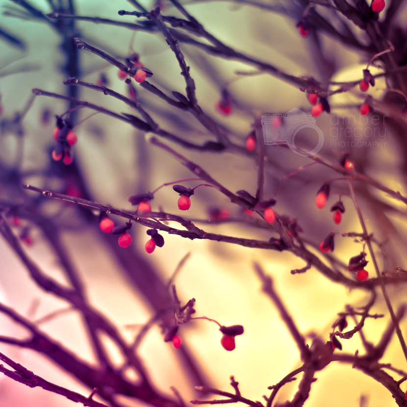 ... Let Us Love Winter, For It Is The Spring Of Genius | By Amber {