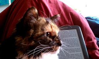 Day 15: The Cat and the Kindle | by quinn.anya