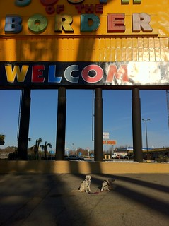 Yearly South of the Border Dogs | by epc