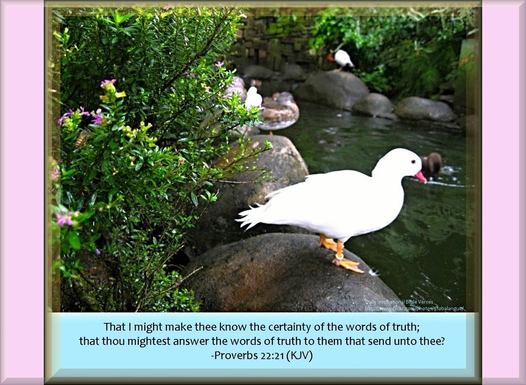 87 daily inspirational bible verse proverbs 22 21 kjv flickr
