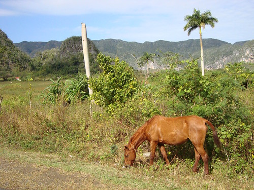 Countryside around Viñales - Cuba - 11 | by Adam Jones, Ph.D. - Global Photo Archive