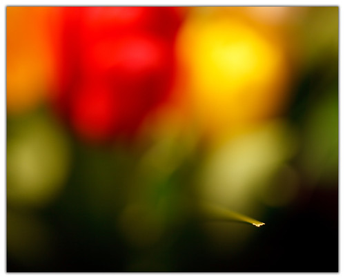 Non-existent DOF | by eugene.photography