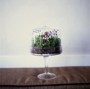 terrrarium, darling. | by susan yee || enpointephotography.com