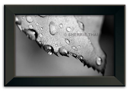 Print: Raindrop on Leaf | by shaire productions