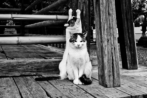 Today's Cat@2011-03-07 | by masatsu