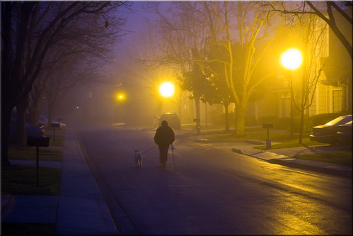 Walking the Dog in the Fog | by Jill Clardy