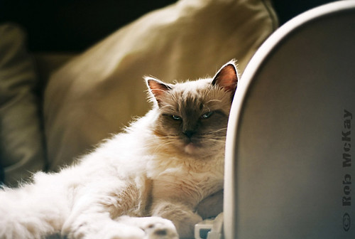 Film Cat Lounging Around | by Rob McKay Photography