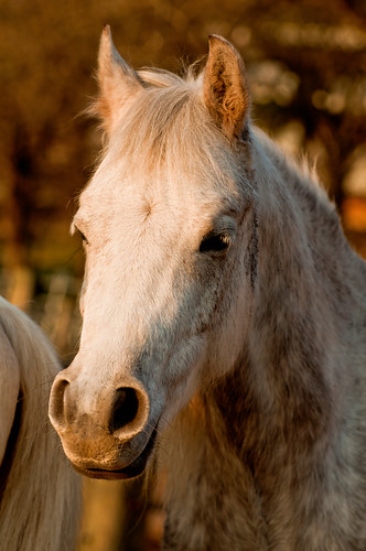 Portrait of a horse | by Tambako the Jaguar
