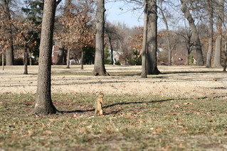 Squirrel at Woodward Park | by lesley zellers