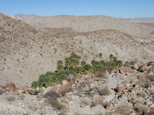 A palm oasis in the wasteland of Anza-Borrego Desert State Park, California