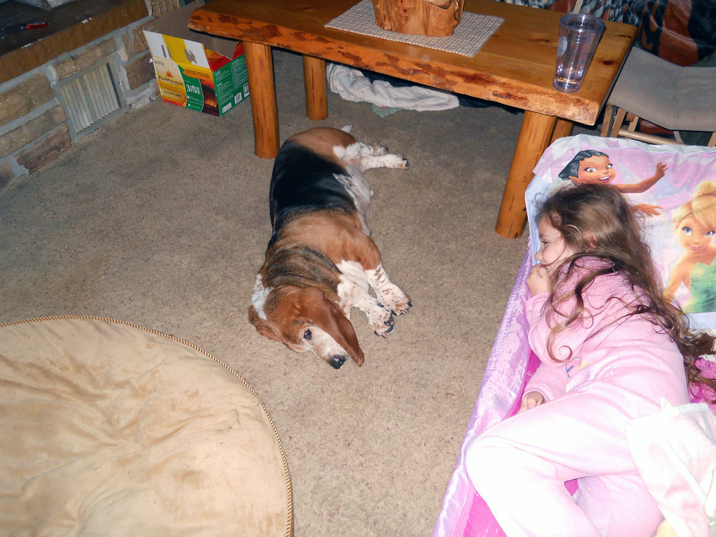 Laughing At Auggie Snoring In The Dark Cazzeri Upton Flickr