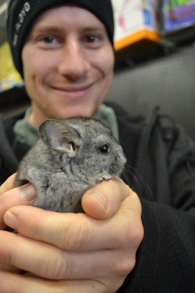 baby chinchilla images
