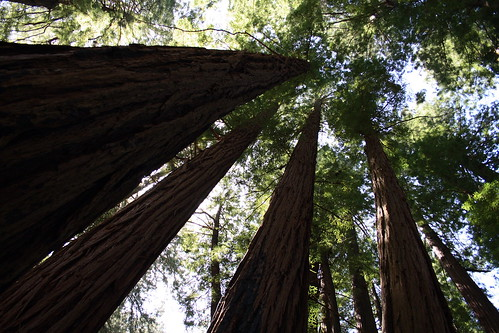 how to get from sfo to muir woods