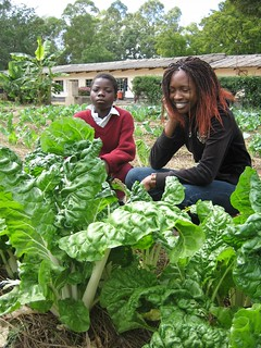 Healthy  spinach in a school garden (urine fertilised) | by Sustainable sanitation