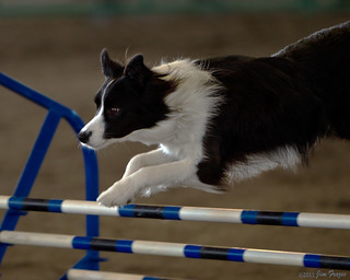 Black and White Border Collie | by Jim Frazee