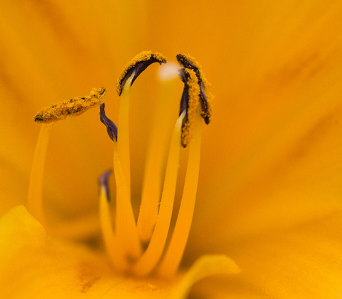 Yellow macro | by CecilieSonstebyPhotography